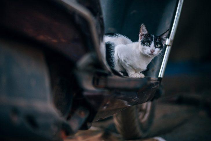 バイクと猫